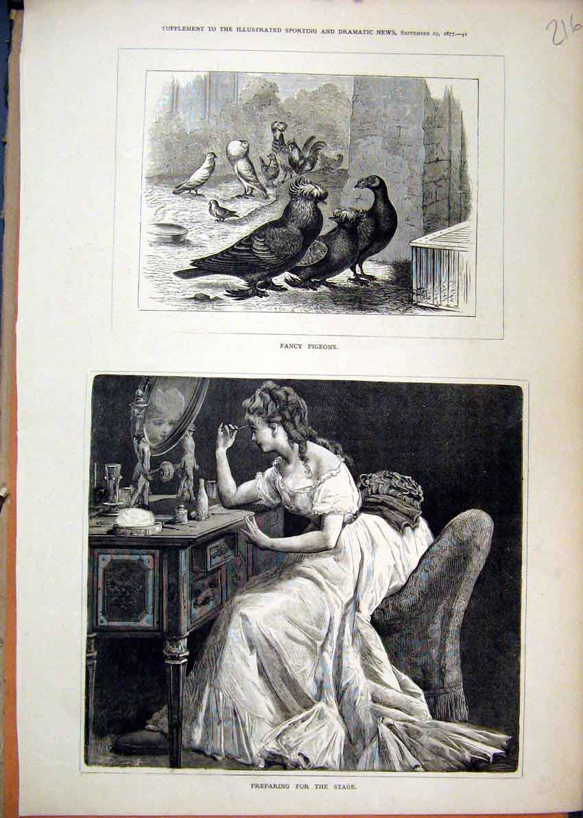 Print Fancy Pigeons Birds 1877 Woman Preparing Stage Make Up 16Mar1 Old Original
