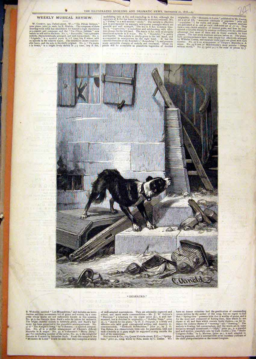 Print 1878 Dog Looking Deserted Building Stairs 47Mar1 Old Original