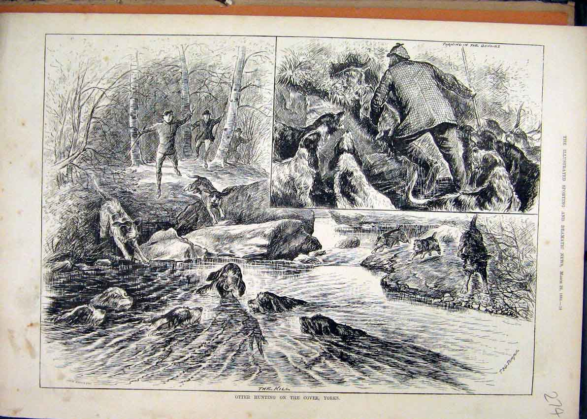 Print Otter Hunting 1884 Cover River Yorks Dogs 74Mar1 Old Original