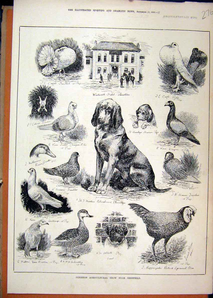 Print 1883 Peniston Agricultural Show Sheffield Birds Dogs 76Mar1 Old Original