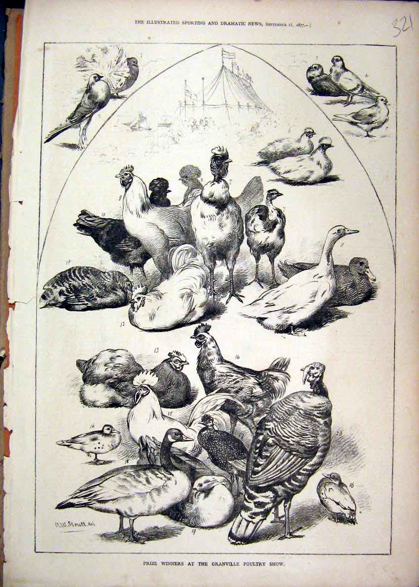 Print Prize Winners Granville Poultry Show 1877 Chickens Duck 21Mar1 Old Original