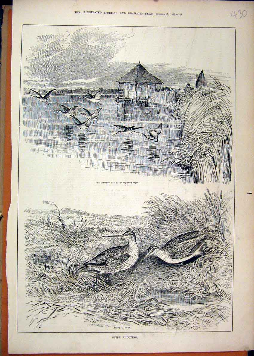 Print 1883 Snipe Shooting Birds Wroxham Broad Flight Water 30Mar1 Old Original