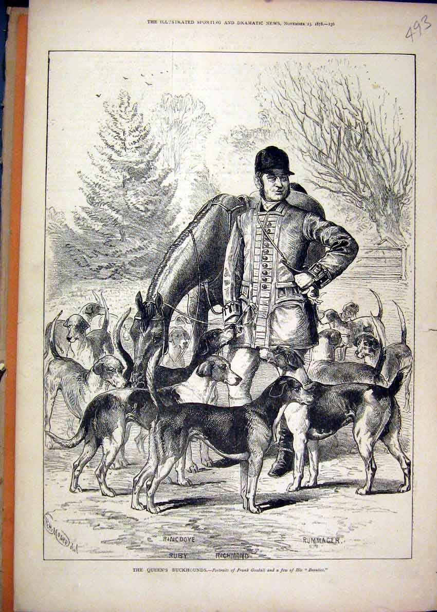 Print Queens Buckhounds 1878 Dog Rummager Richmond Ringdove 93Mar1 Old Original