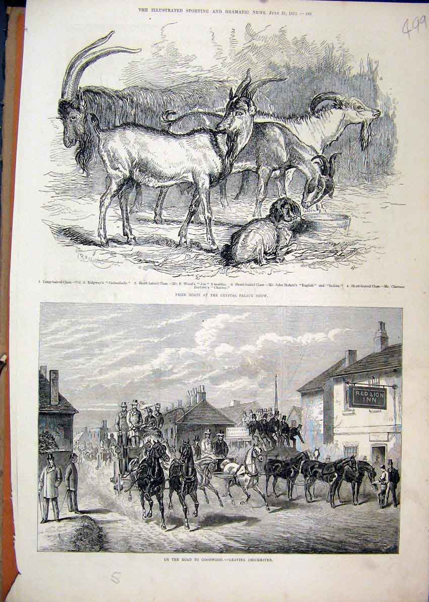 Print Chichester Horse Carriage 1875 Goats Crystal Palace 99Mar1 Old Original