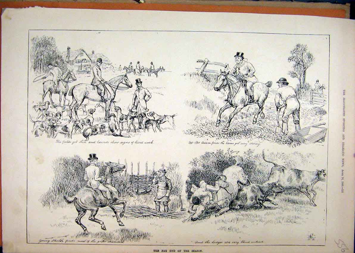 Print 1888 Hunting Season Hounds Dog Horses Falling Cattle 56Mar1 Old Original