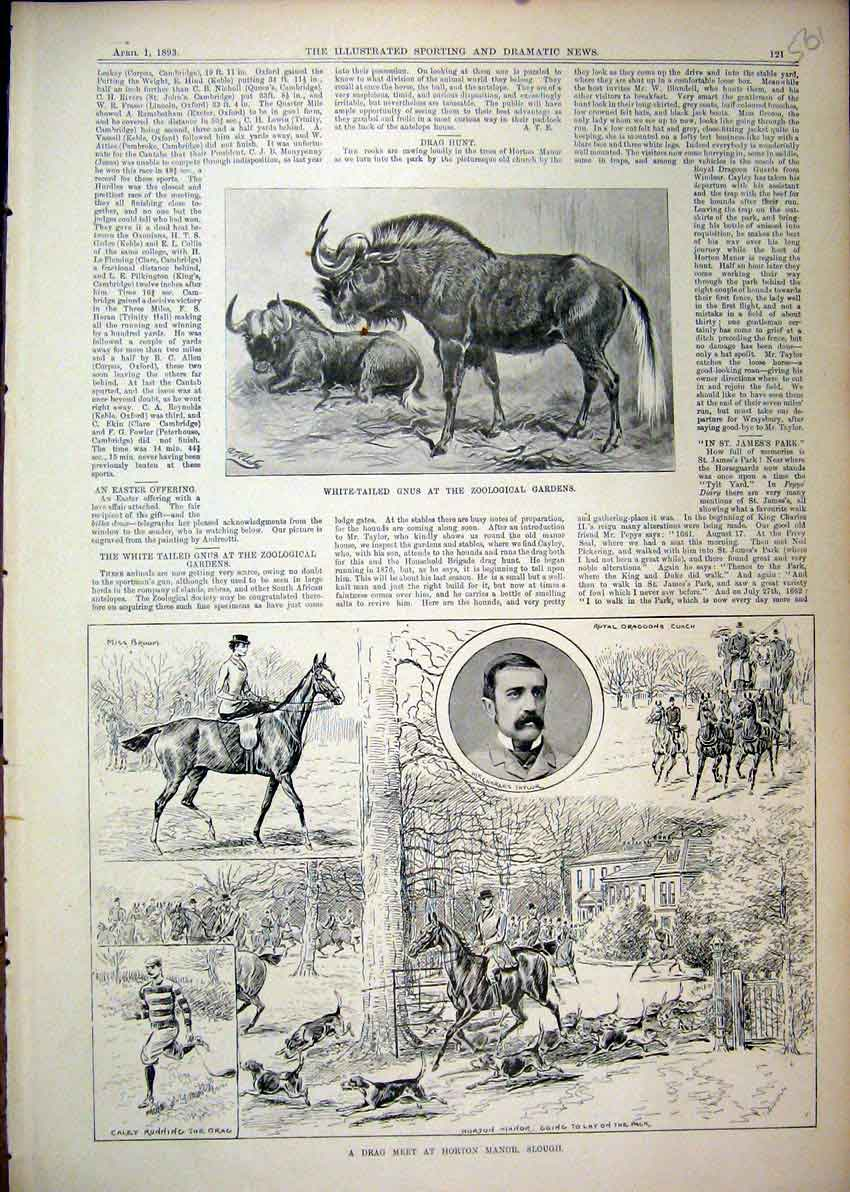 Print 1893 White-Tailed Gun Drag Meet Horton Manor Slough 61Mar1 Old Original