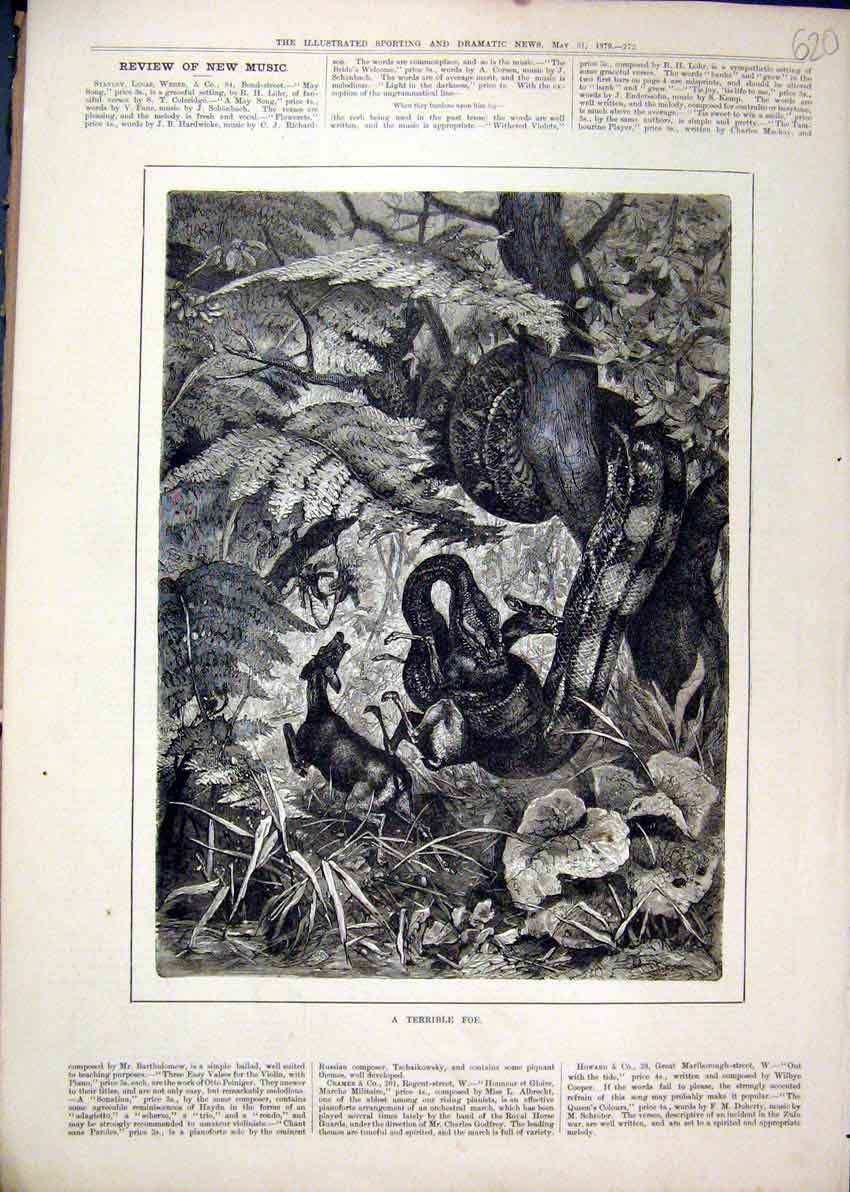 Print Snake Tree Eating Deer 1879 Country Fine Art 20Mar1 Old Original