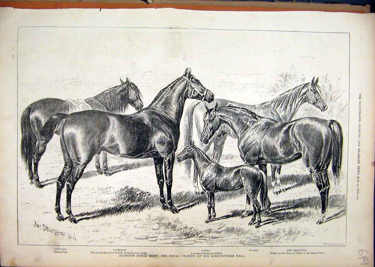Print 1876 Islington Horse Show Royal Jung Bahadoor Nawab 49Mar1 Old Original