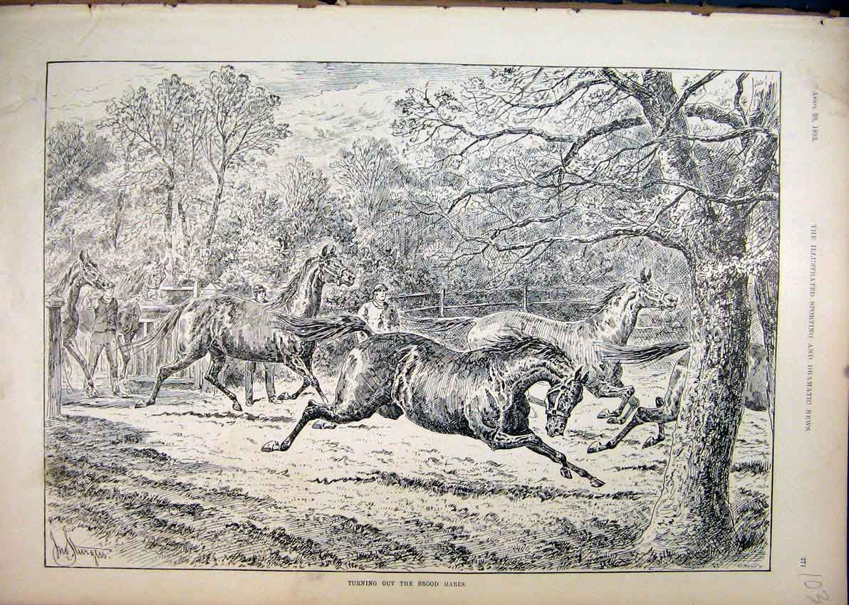 Print 1893 Turning Brood Mares Horses Running Field Country 03Mar1 Old Original