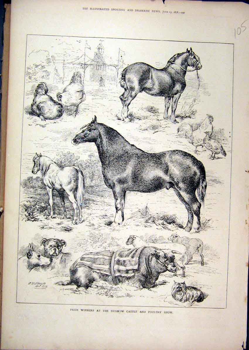 Print 1878 Prize Winners Dunmow Cattle Poultry Show Horse 05Mar1 Old Original