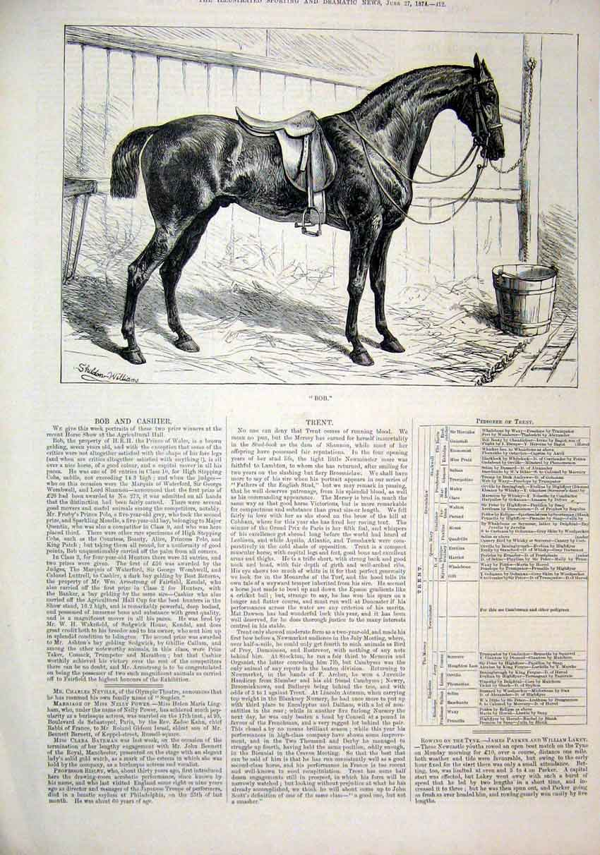 Print Horse 1874 Bob Prince Wales Brown Gelding 12Mar1 Old Original