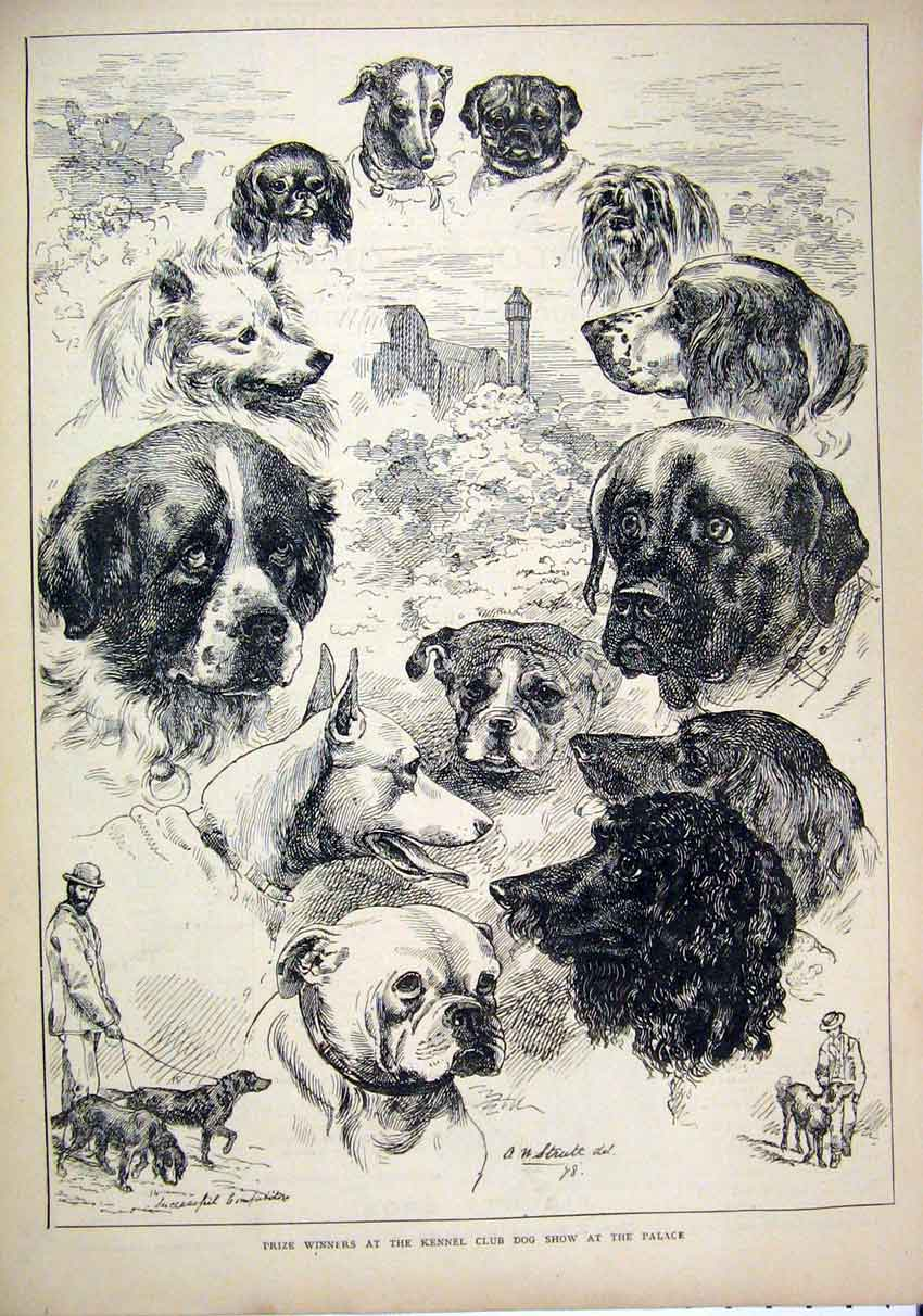 Print 1878 Prize Winners Kennel Club Dog Show Palace 60Mar1 Old Original