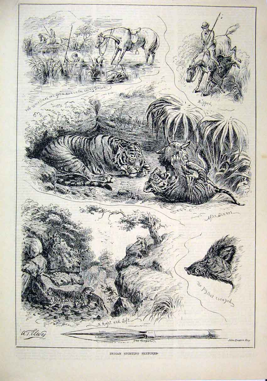 Print Indian Sporting Sketches 1883 Horse Weapon Tiger Rock 90Mar1 Old Original