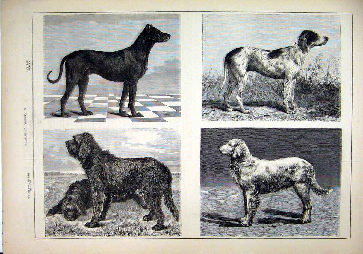 Print Kennel Dogs 1878 Catch Sultan Ranger Murphy Bella Hound 52Mar1 Old Original