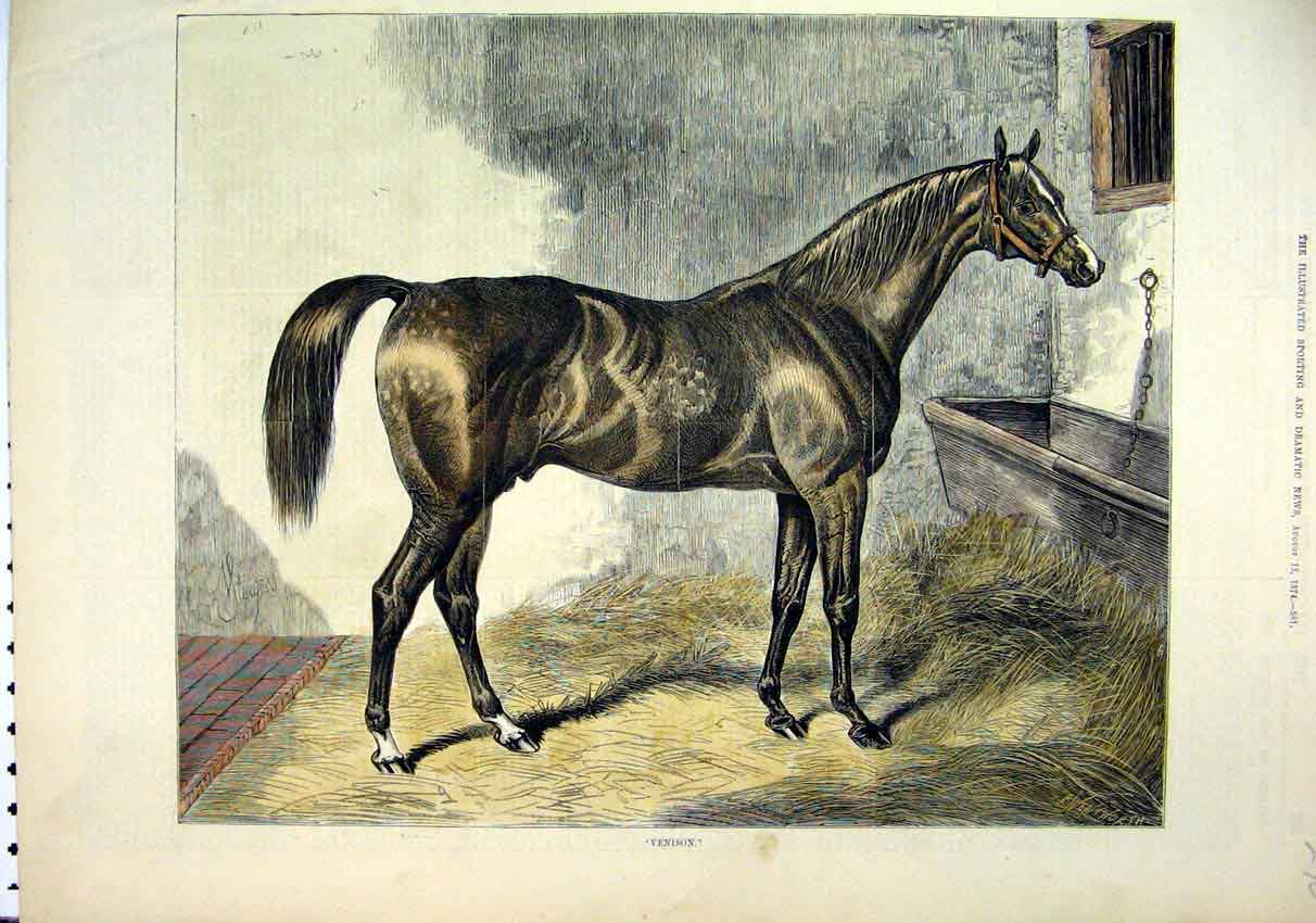 Print 1874 Beautiful Sepia Horse Venison Stable Bed 90Mar1 Old Original