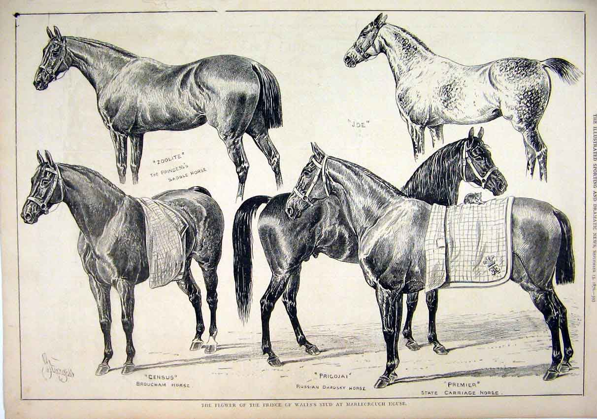 Print 1876 Prince Wales Stud Marlborough House Horses Joe 29Mar1 Old Original