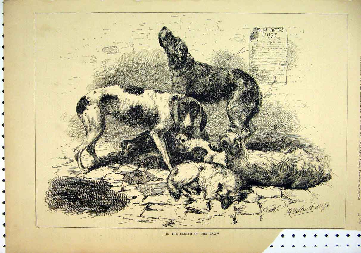 Print 1878 Dogs Police Scruffy Cobbles 68Mar1 Old Original