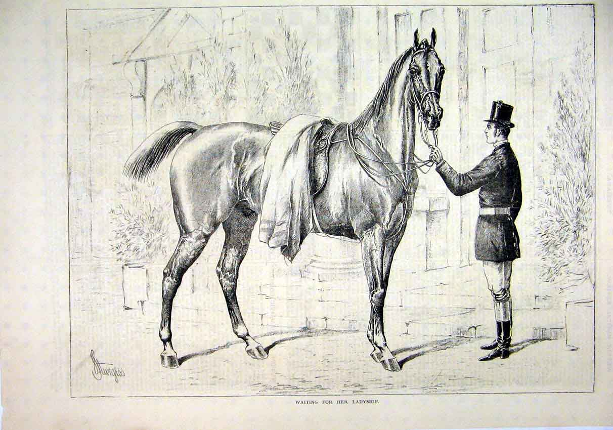 Print 1878 Man Holding Horse Waiting Ladyship 00Mar1 Old Original