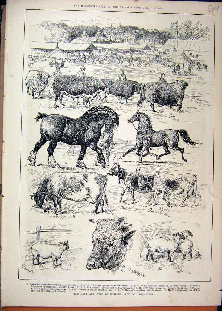 Print 1887 Bath England Show Dorchester Cow Horse Sheep 49Mar1 Old Original
