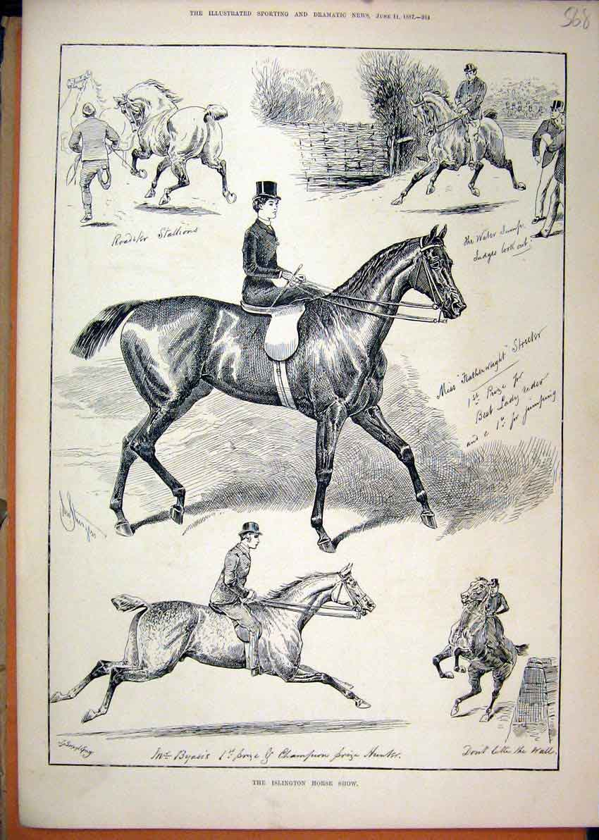 Print 1887 Islington Horse Show Stallion Hunter Featherweight 68Mar1 Old Original