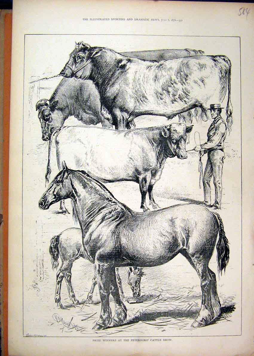 Print 1876 Prize Winners Peterboro Cattle Show Cart Horse 84Mar1 Old Original