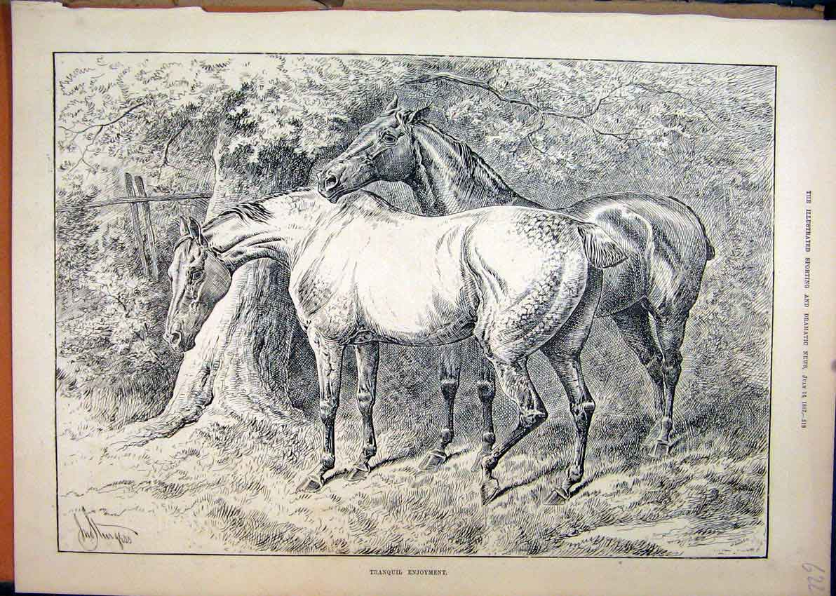 Print 1887 Horses Dock Tail Tree Country Scene Sketch 22Mar1 Old Original