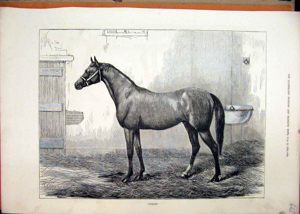Print 1874 Portrait Horse Julius Stable Straw Bed 65Mar1 Old Original