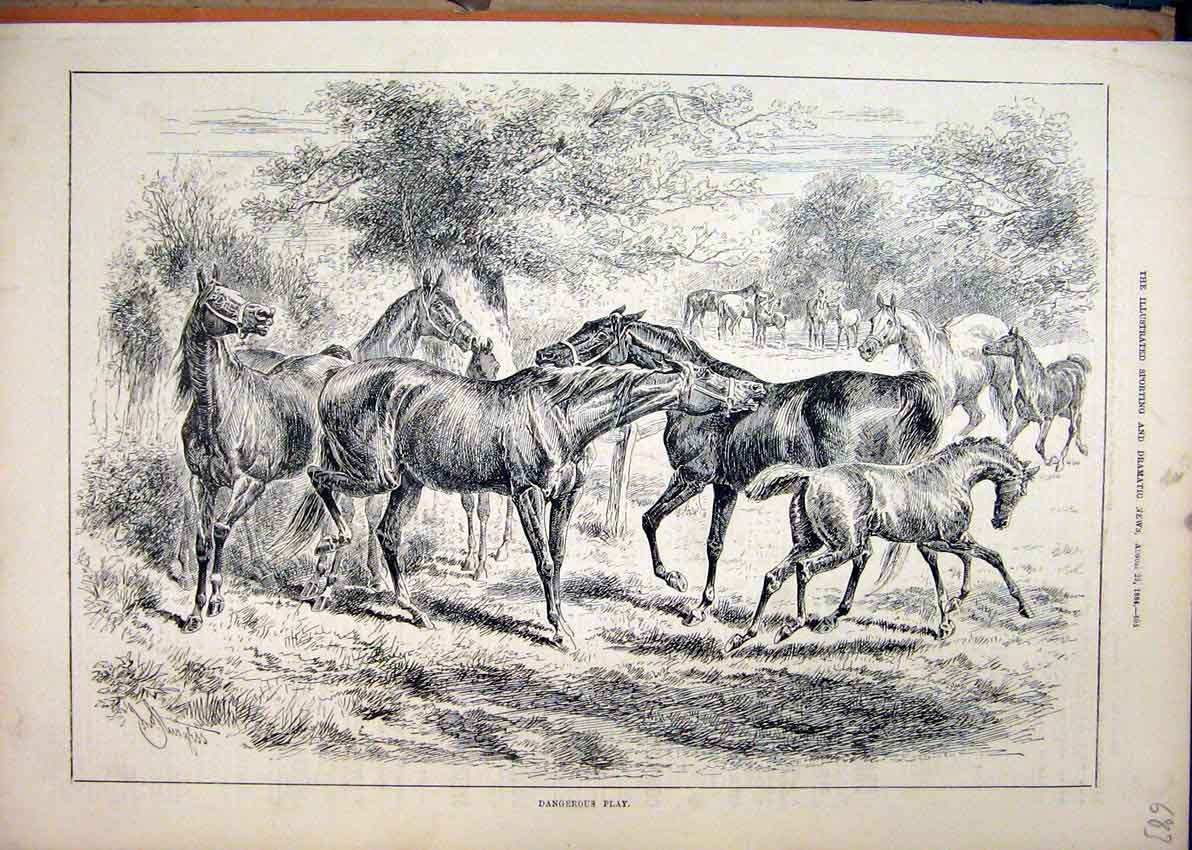 Print Horses Playing Field 1884 Trees Country Scene 83Mar1 Old Original