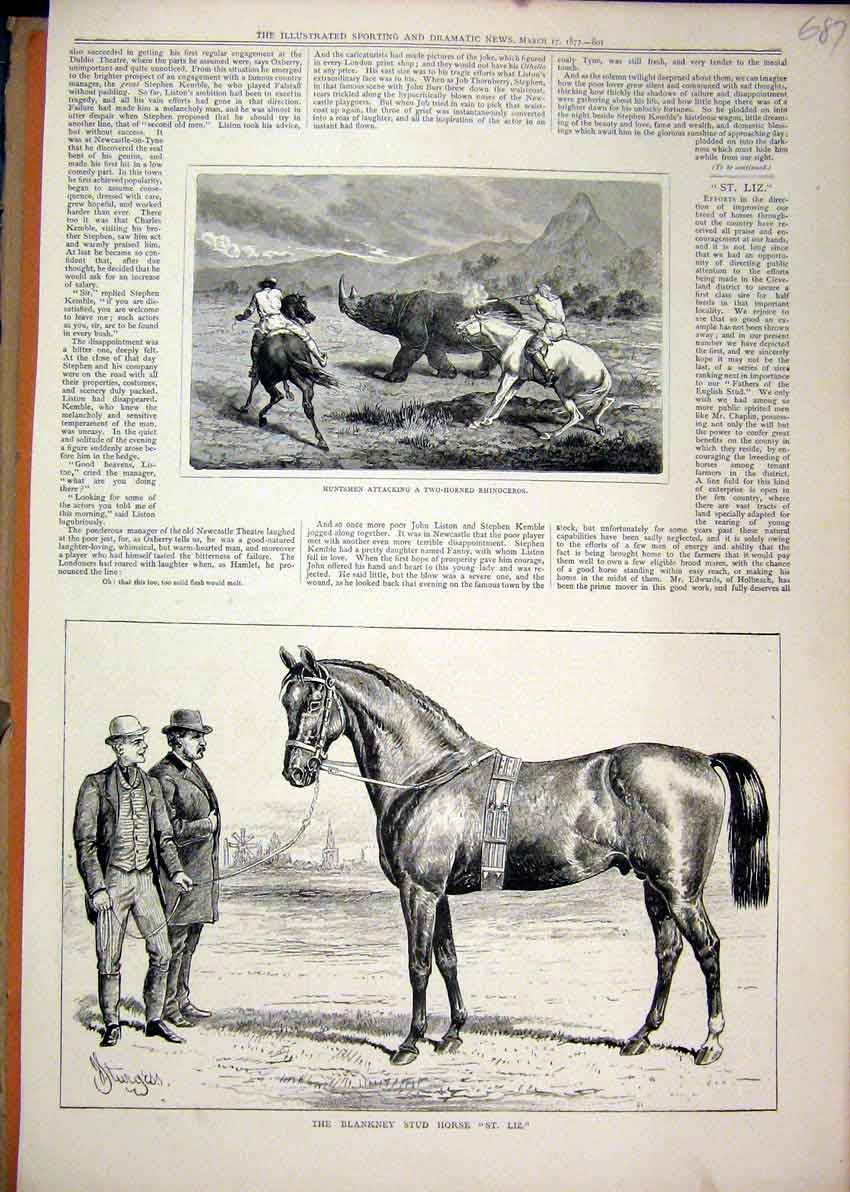 Print 1877 Blankney Stud Horse St. Liz Huntsmen Rhinoceros 87Mar1 Old Original