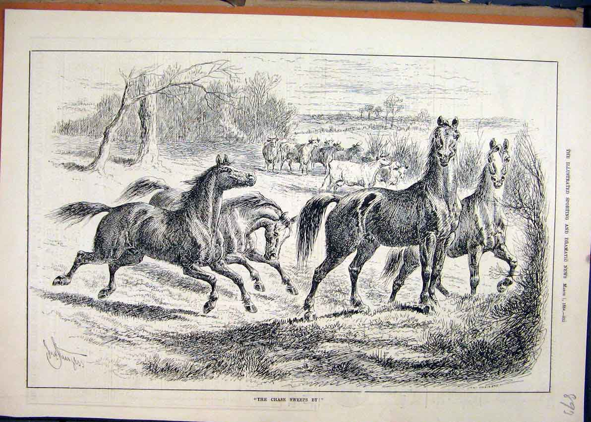 Print 1884 Wild Horses Running Field Cows Country Scene 93Mar1 Old Original