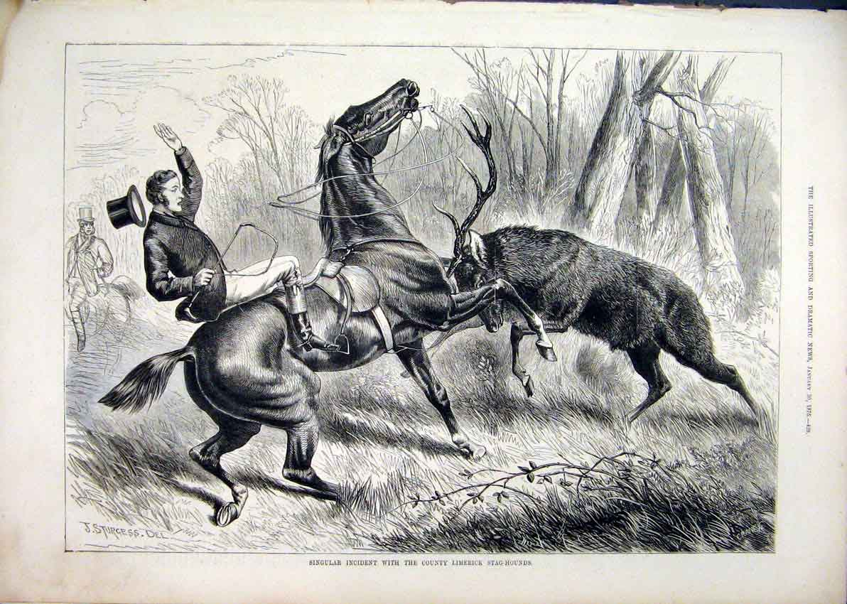 Print 1875 Stag-Hounds County Limerick Attack Horse Rider 93Mar1 Old Original