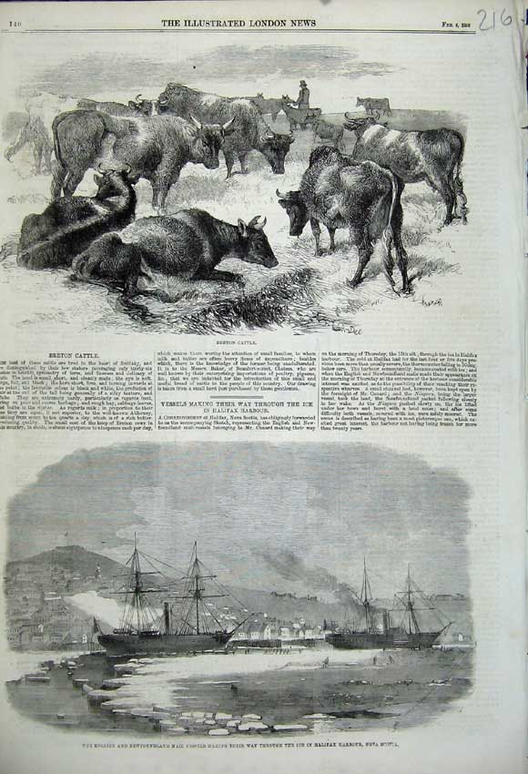 Print Breton Cattle1859 English Mail Ship Ice Halifax Harbour 216N107 Old Original