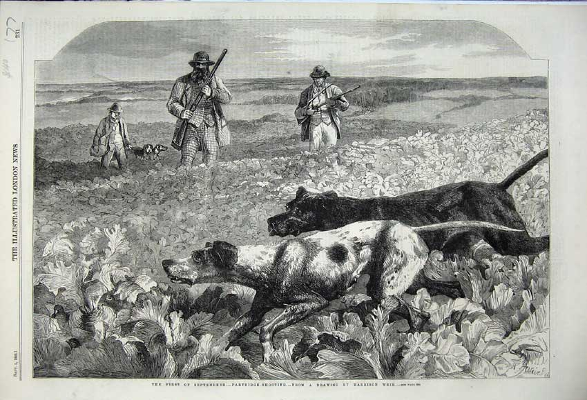 Print 1859 Partridge Shooting Men Rifles Sport Dogs Hounds 177N108 Old Original