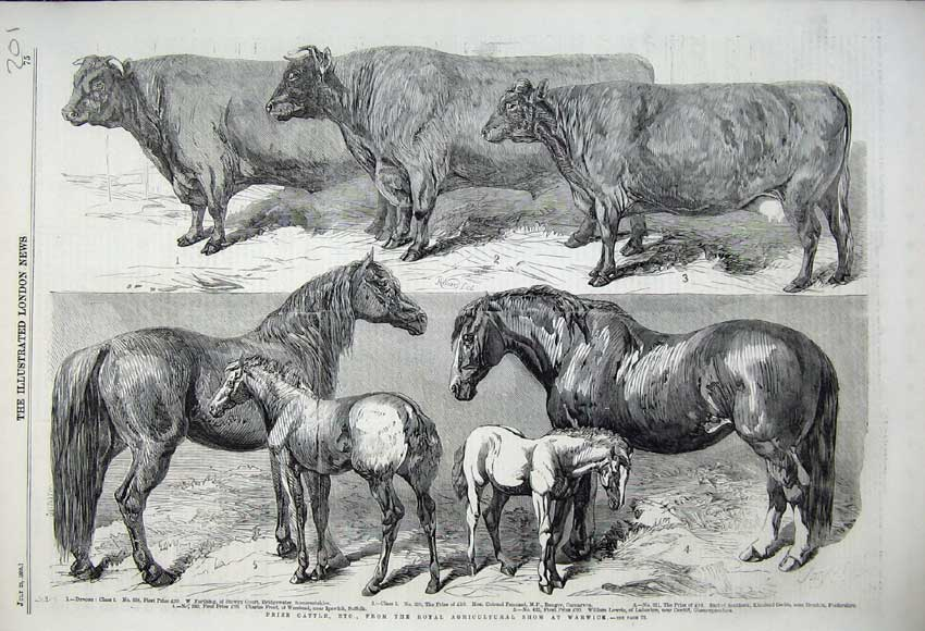 Print 1859 Prize Cattle Royal Agricultural Show Horses Foals 201N108 Old Original