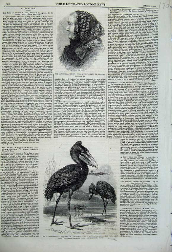 Print 1860 Stork White Nile Bird Zoological Mrs Jameson Lady 170N109 Old Original