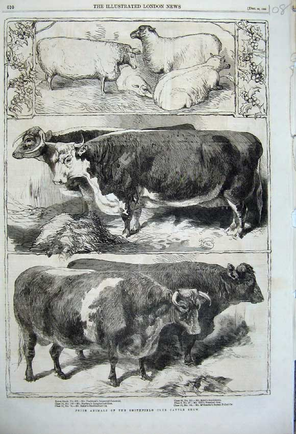 Print 1860 Prize Cattle Smithfield Club Show Ox Cow Cotsw108N110 Old Original