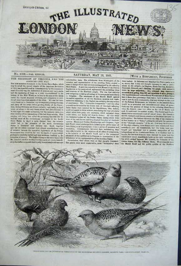 Print 1861 Pallas Sand Grouse Birds Zoological Gardens London 135N111 Old Original