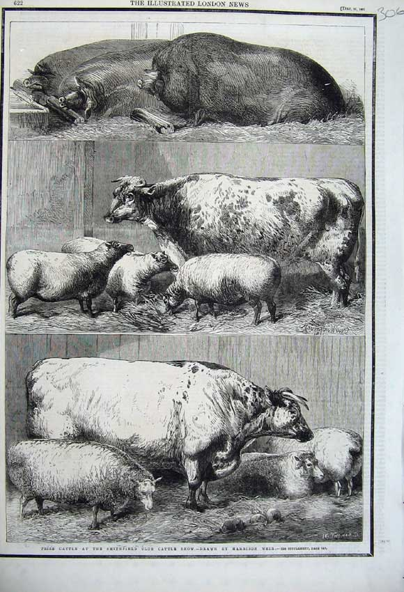 Print 1861 Prize Cattle Smithfield Club Cattle Show Sheep Pig 306N112 Old Original
