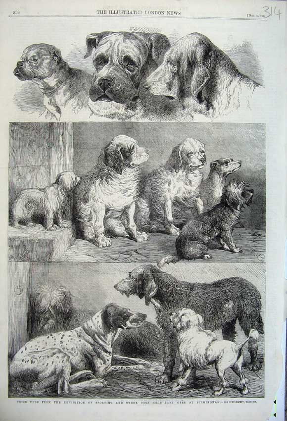 Print 1861 Prize Dogs Sporting Exhibition Birmingham Animals 314N112 Old Original