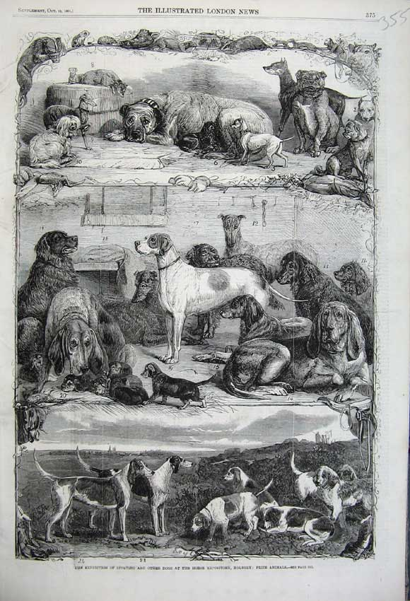 Print 1861 Sporting Dogs Horse Repository Holborn Prize 355N112 Old Original