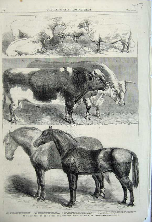 Print 1861 Animals Royal Agricultural Show Hosrse Cow Sheep 417N112 Old Original
