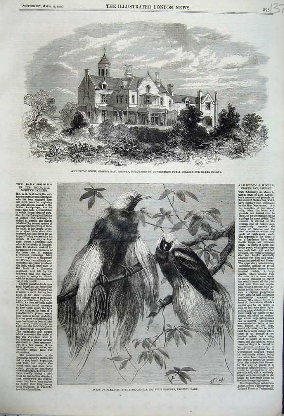 Print 1862 Ashburton House Stockport Birds Paradise Regent 137N113 Old Original