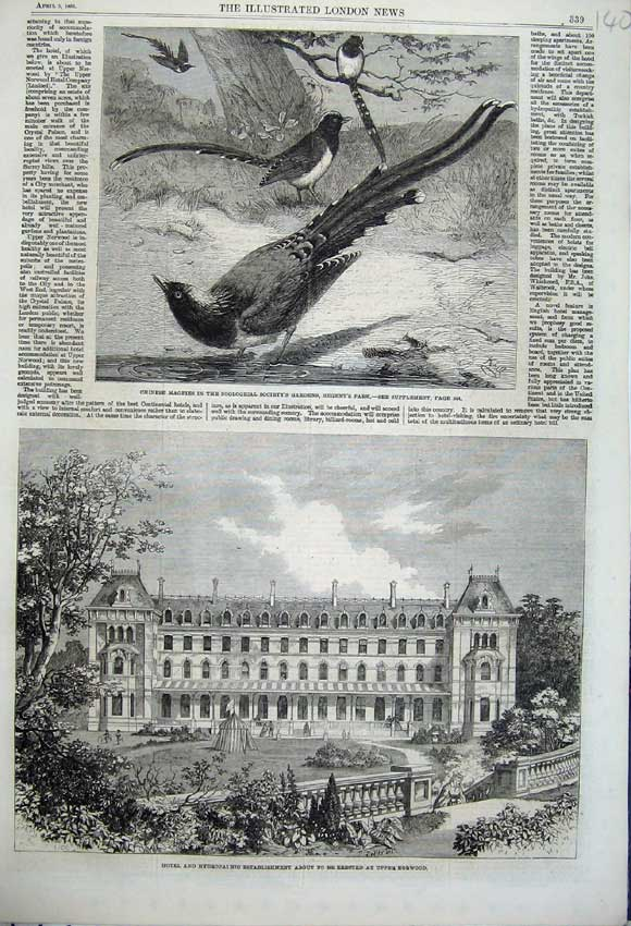 Print 1862 Hotel Hydropathic Norwood Chinese Magpies Birds 140N113 Old Original