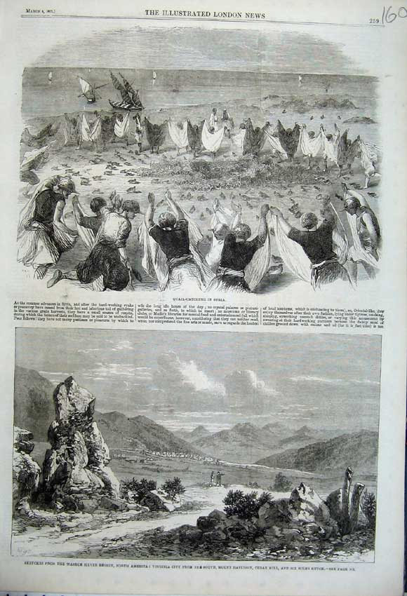 Print Washoe Virginia Davidson Cedar 1862 Quail Birds Syria 160N113 Old Original