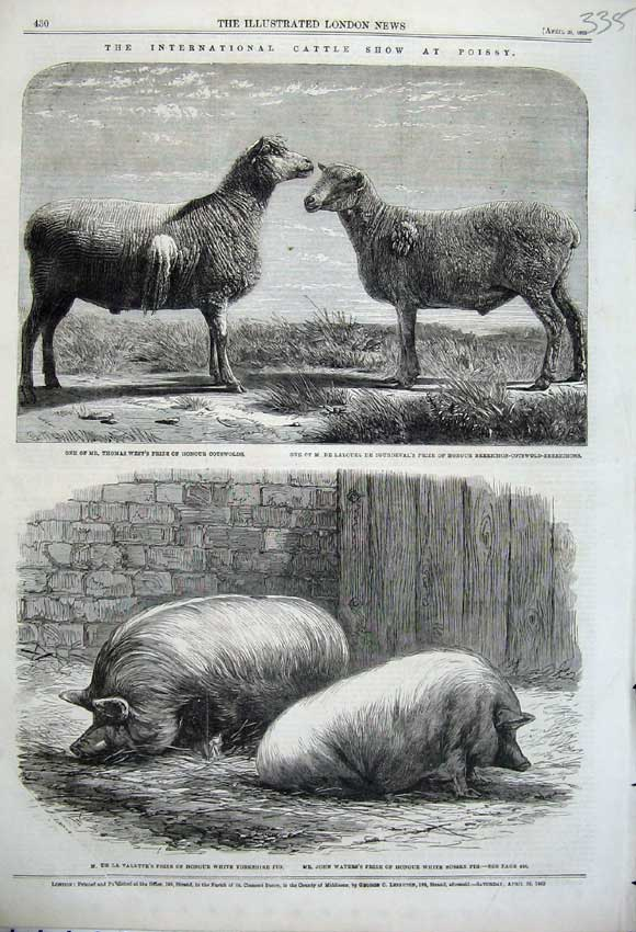 Print 1862 Cattle Show Poissy CotswSheep Yorkshire Pigs 335N113 Old Original