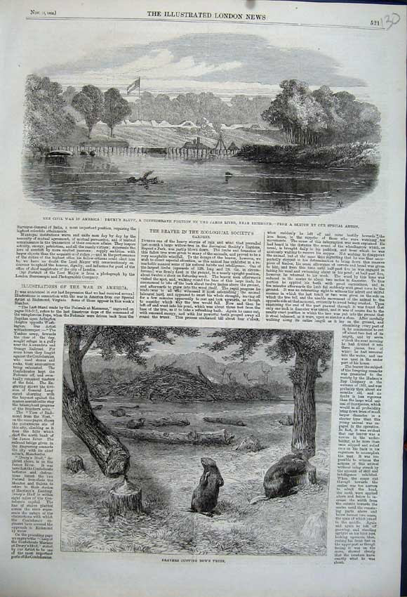 Print Beavers Cutting Down Trees 1862 War Amercia James River 130N114 Old Original