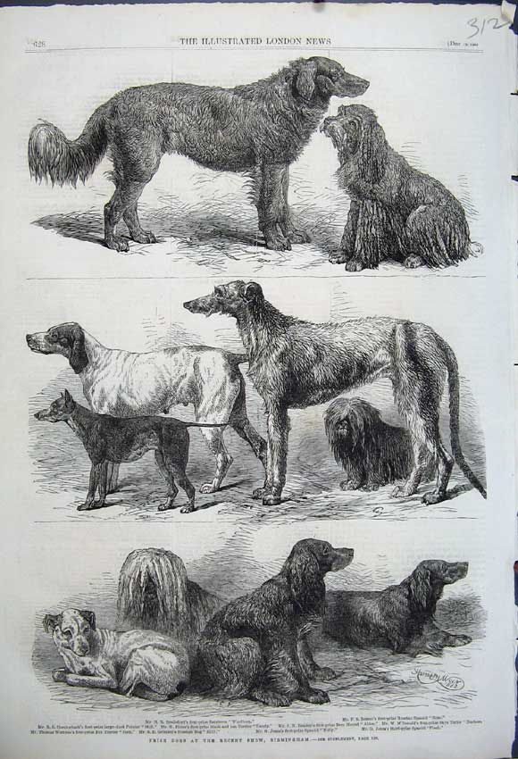Print 1862 Prize Dogs Birmingham Retriever Spaniel Terrier 312N114 Old Original