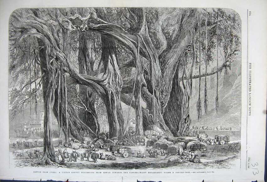 Print 1862 Cotton India Convoy Rewah Encampment Banyan Tree 313N114 Old Original