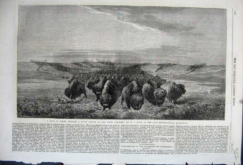Print 1862 Herd Bisons Crossing River Upper Missouri Hays 322N114 Old Original