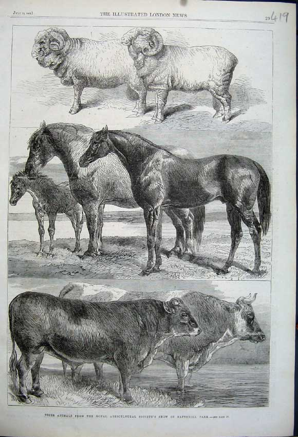 Print 1862 Prize Animals Royal Agricultural Show Battersea 419N114 Old Original